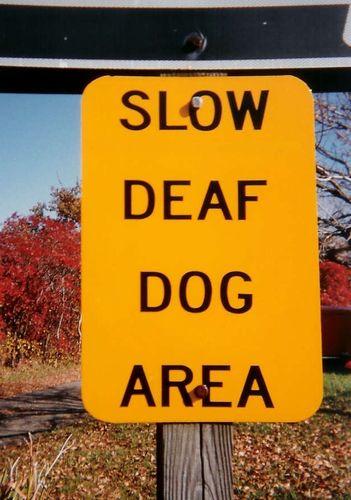Http www reuters com article 2011 02 09 us dog deaf odd