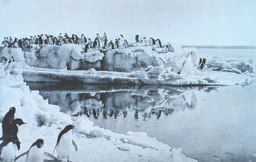 "Image from Wikipedia: ""Adélie Penguins on the ice-foot at Cape Adare in the Antarctic. Photo taken in 1911 or 1912 by George Murray Levick, a member of Robert Scott's Terra Nova Expedition. Published in Scott's Last Expedition (1913). Dodd, Mead, and Company. New York. Volume II. Page 87. Also published in Levick, G. Murray (1914). Antarctic Penguins: a study of their social habits. New York: McBride Nast and Company."""